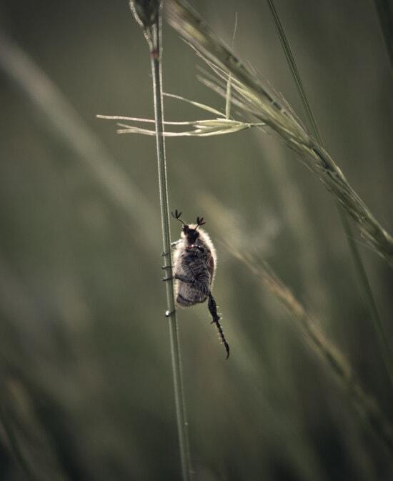 Insekt, Fehler, Stretching, Bein, Natur, Tier, Gliederfüßer, Arachnid, Tierwelt, Spinnennetz