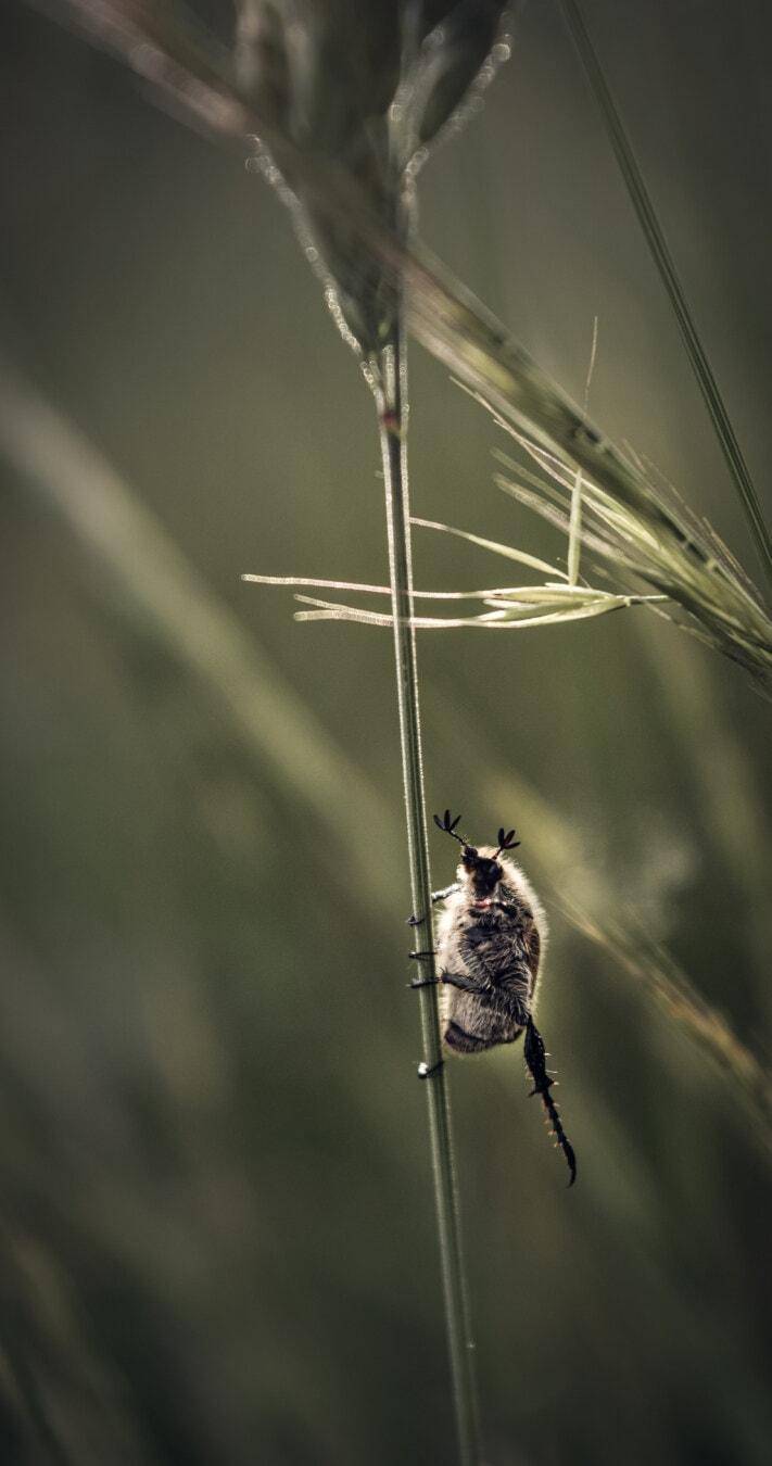 Makro, aus nächster Nähe, Insektizid, Bein, Stretching, Natur, Insekt, Tierwelt, Käfer, Tier