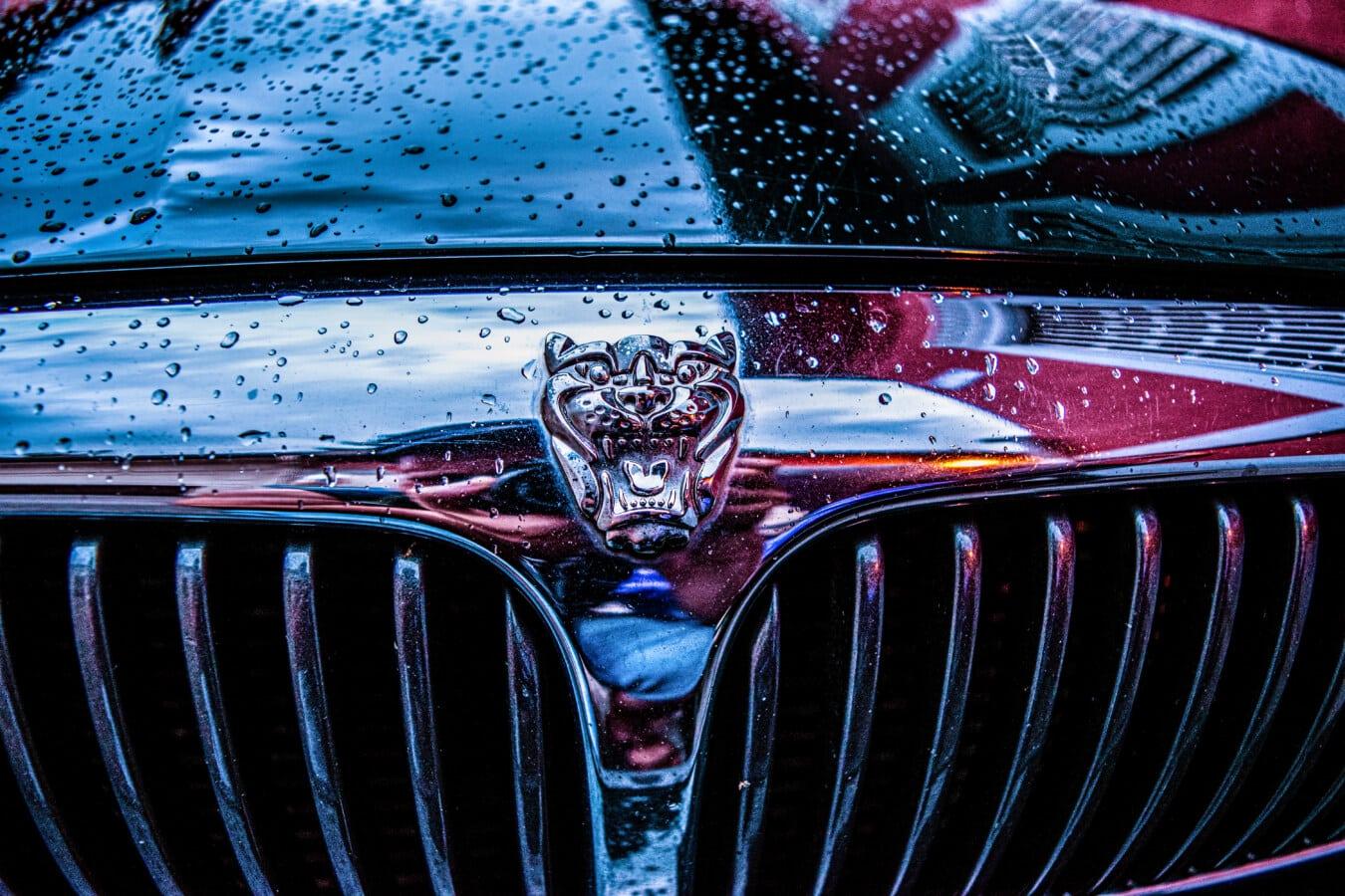 Jaguar, signe, chrome, voiture, symbole, réflexion, Wet, en acier inoxydable, pluie, hotte