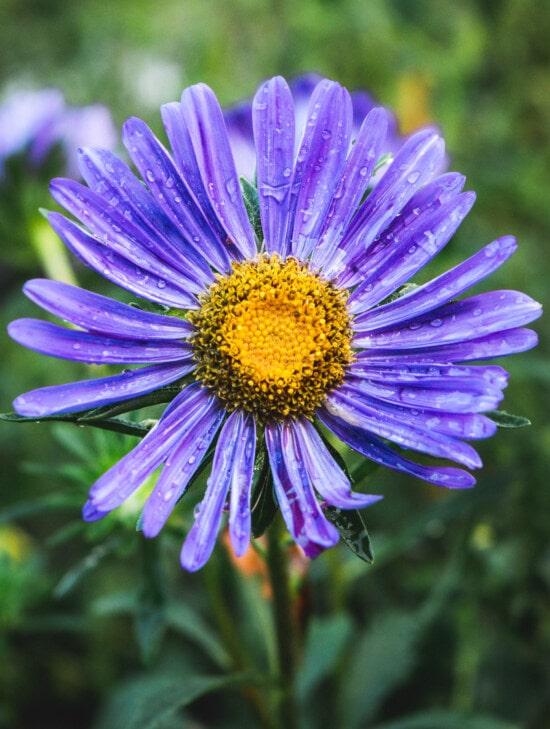 close-up, wildflower, moisture, raindrop, dew, wet, flowers, blossom, flower, garden