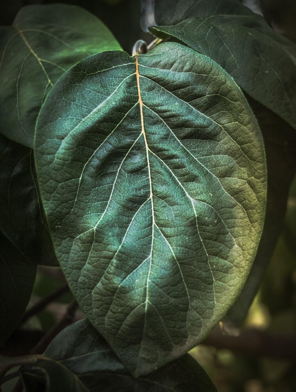 grünes Blatt, Quitte, groß, aus nächster Nähe, Vene, Detail, Kraut, Anlage, Blatt, Struktur