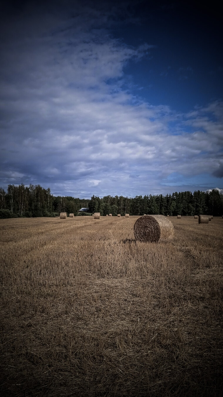 bale, wheatfield, round, haystack, hay, hay field, agriculture, field, food, landscape