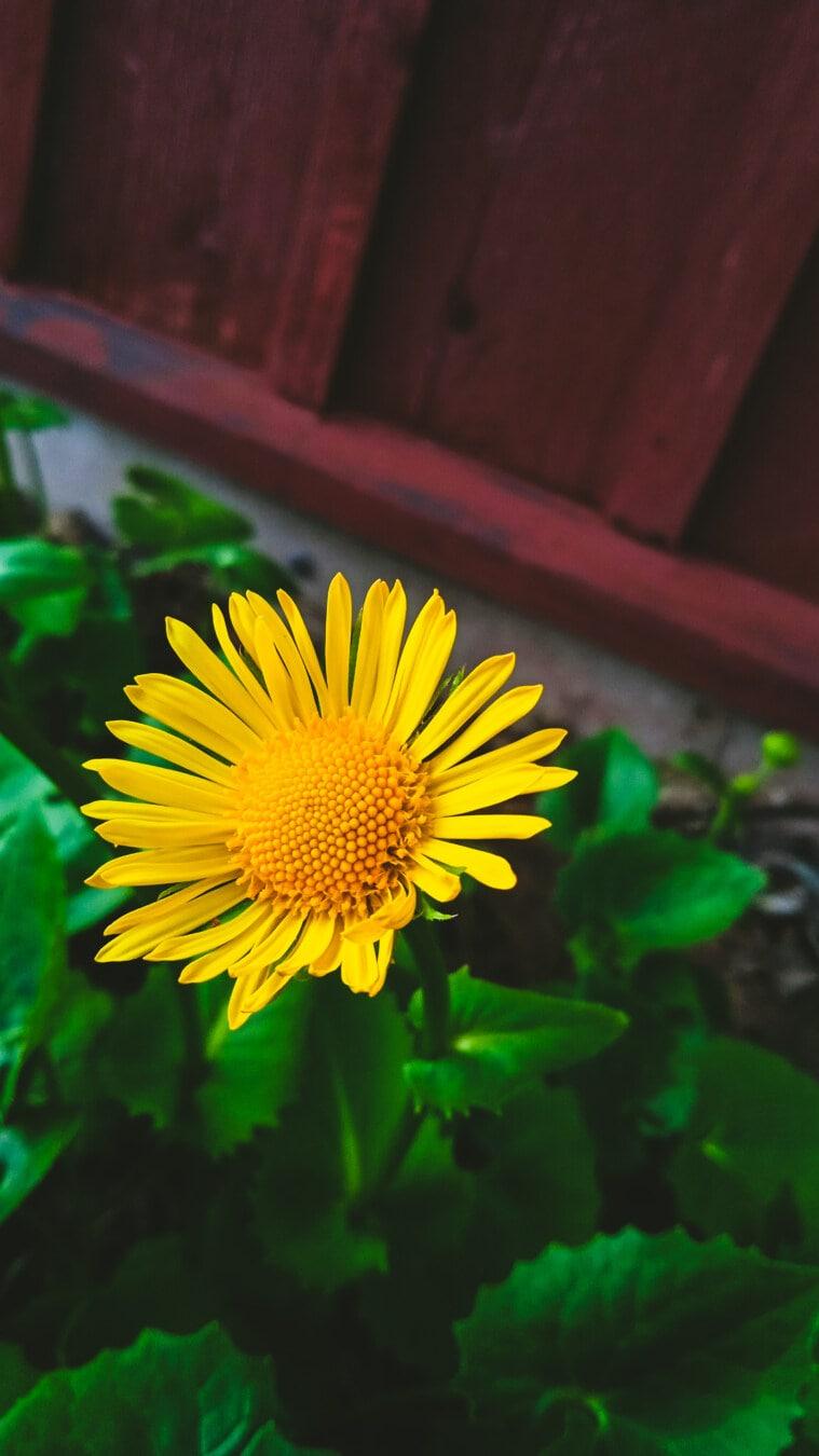 jardin fleuri, Jaune, fleur, horticulture, jardinage, arrière-cour, nature, plante, feuille, été
