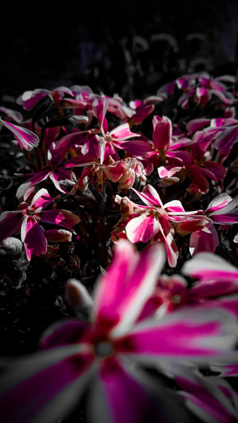 purplish, pinkish, flowers, close-up, wildflower, shadow, darkness, nature, flower, flora