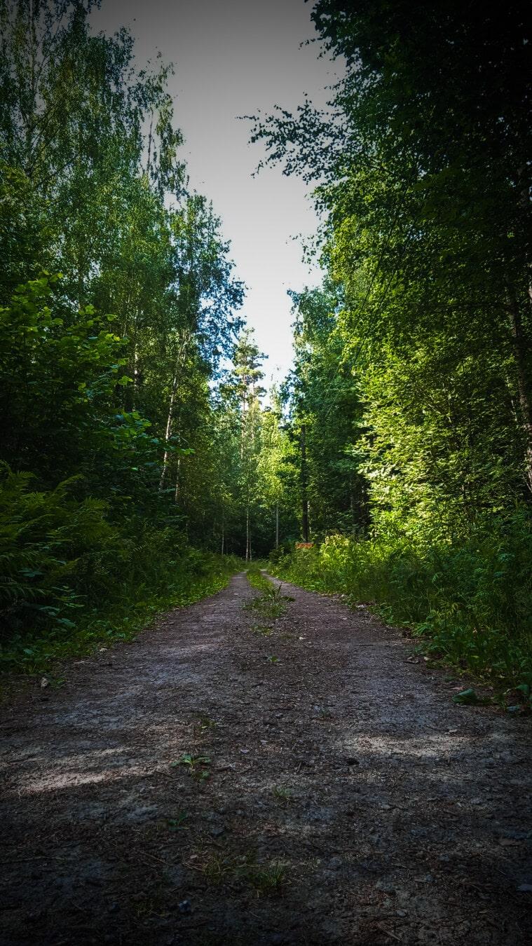 sentier de la forêt, route forestière, forêt, printemps, ombre, sentier, feuille, arbre, nature, bois