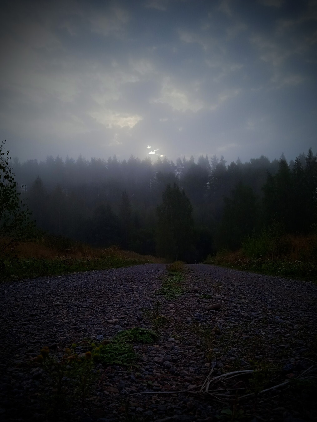 Itinéraire, soirée, ténèbres, brumeux, brume, nuages, bleu foncé, paysage, arbre, bois