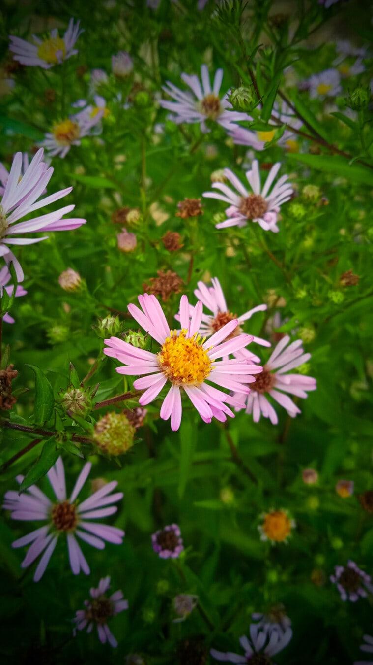 pinkish, wildflower, grassy, flora, summer, nature, garden, flower, petal, leaf