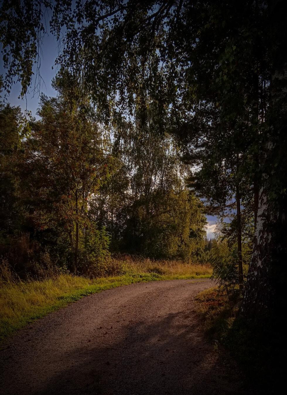 Forststraße, Schatten, Straße, Wald, Landschaft, Bäume, Struktur, Herbst, Park, Holz