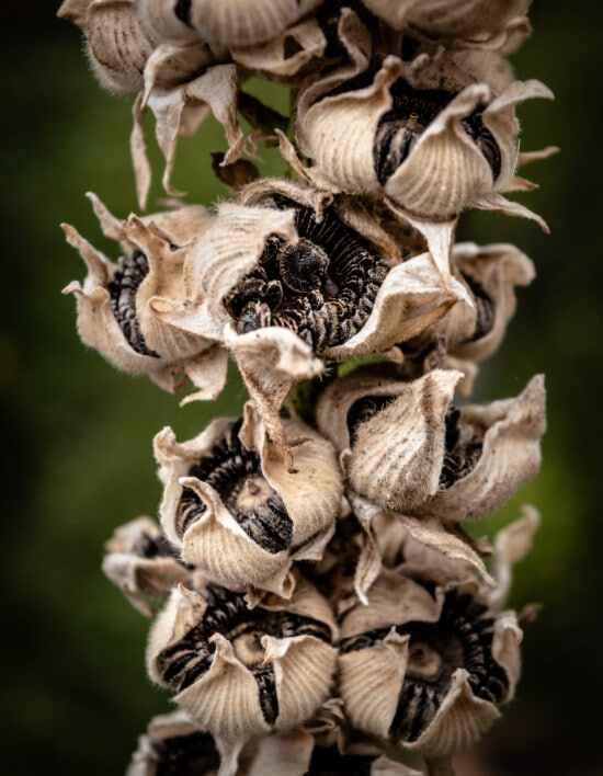 seed, close-up, flower, dry season, horticulture, biology, botany, plant, brown, detail