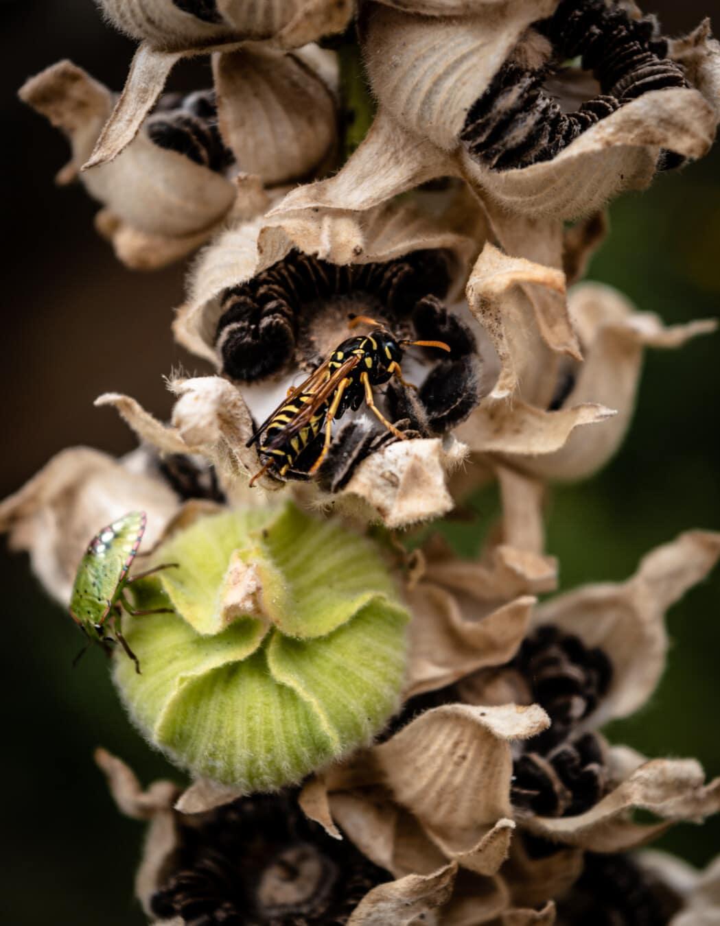 guêpe, insecte, vert, Beetle, semences, fleur, fermer, nature, pollen, herbe