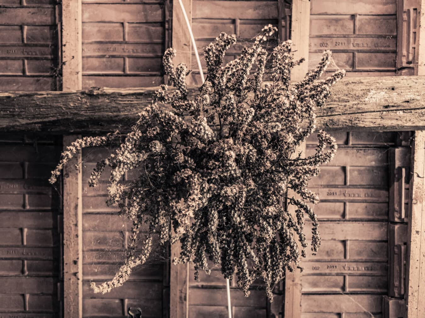 roof, underneath, hanging, bouquet, vintage, sepia, old, building, architecture, wood