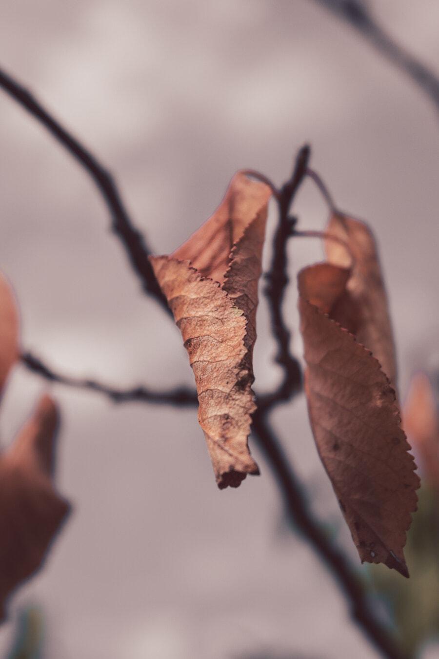 yellow leaves, dry season, autumn season, branches, leaf, nature, tree, outdoors, blur, wood