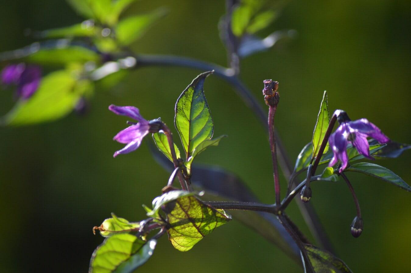fleurs sauvages, violacé, botanique, tige, herbe, fleur, nature, jardin, plante, feuille