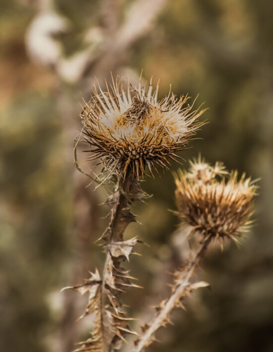 mauvaises herbes, saison sèche, tranchant, fermer, sec, à l'extérieur, nature, plante, flore, été