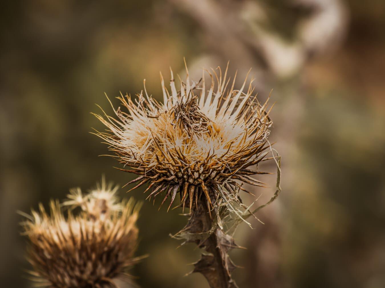 herbe, fleur, saison sèche, tranchant, fermer, épine, plante, à l'extérieur, colonne vertébrale, nature
