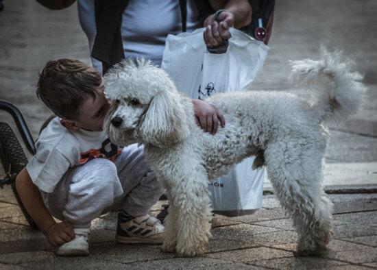 boy, playful, purebred, pet, dog, hugging, child, puppy, canine, cute
