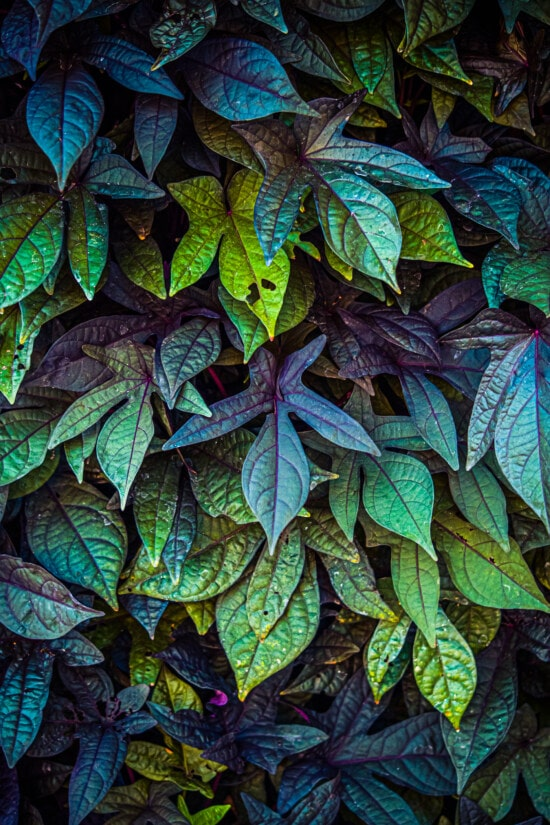 fluorescent, colorful, leaves, dark green, yellow green, reflection, shadow, flare, plant, shrub