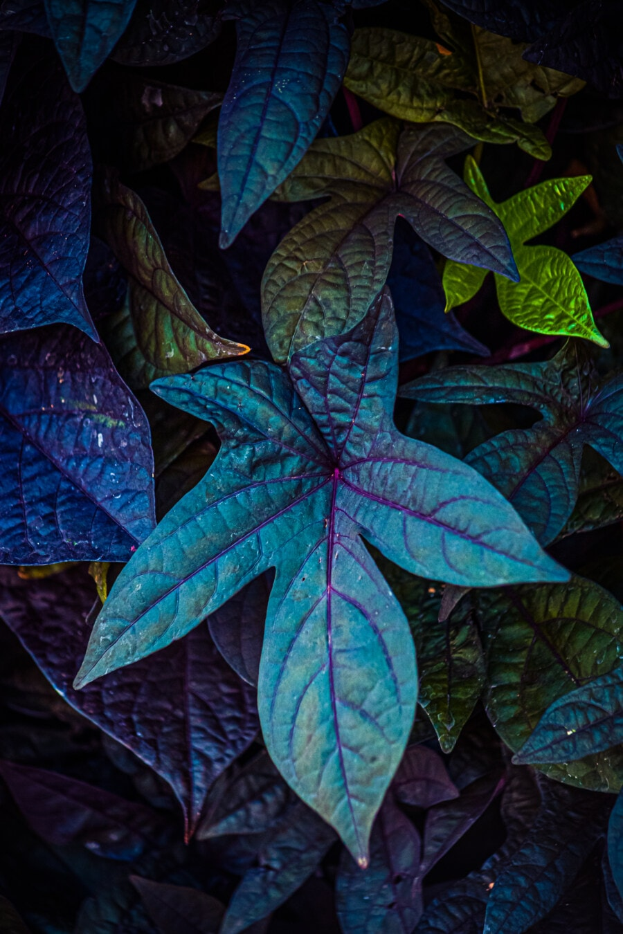 dark green, leaf, luminescence, fluorescent, flare, herb, texture, pattern, shrub, color