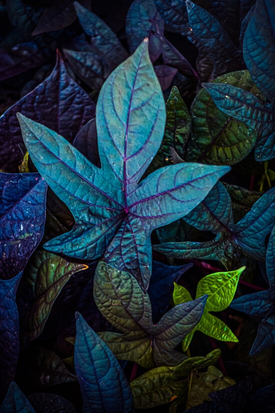 fluorescent, green leaves, leaves, colorful, shadow, dark, pattern, texture, leaf, shrub
