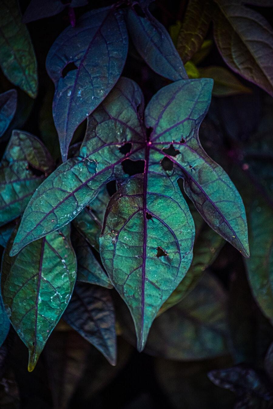 leaf, dark green, hole, green leaf, texture, shade, nature, shrub, flora, garden