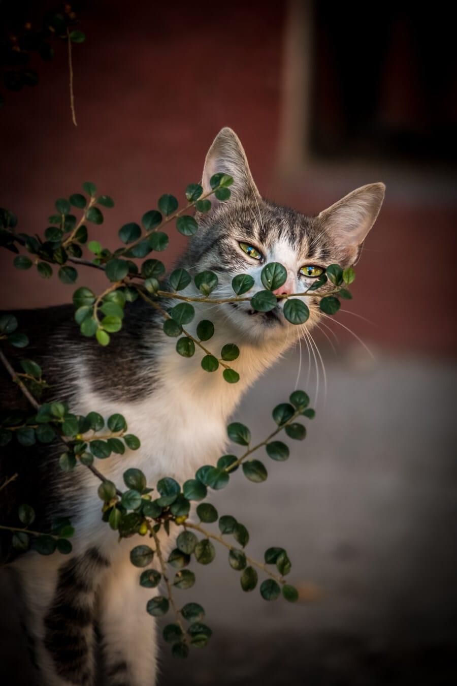adorable, jeune, ludique, chat domestique, brindille, buissons, minou, animal, moustaches, mignon