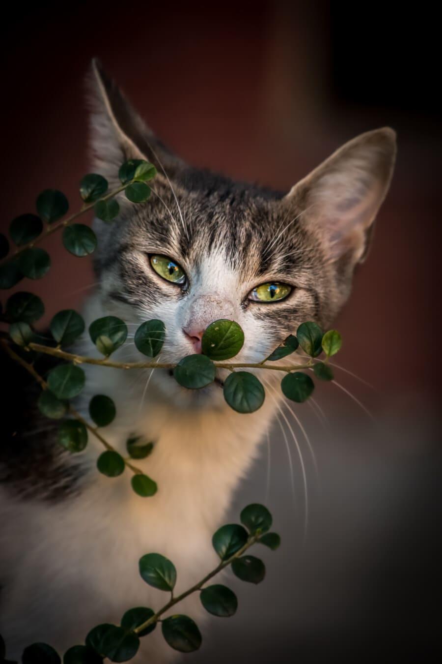 gatito, vertical, adorable, amarillo verdoso, ojos, bigotes, contacto directo, felino, lindo, Kitty