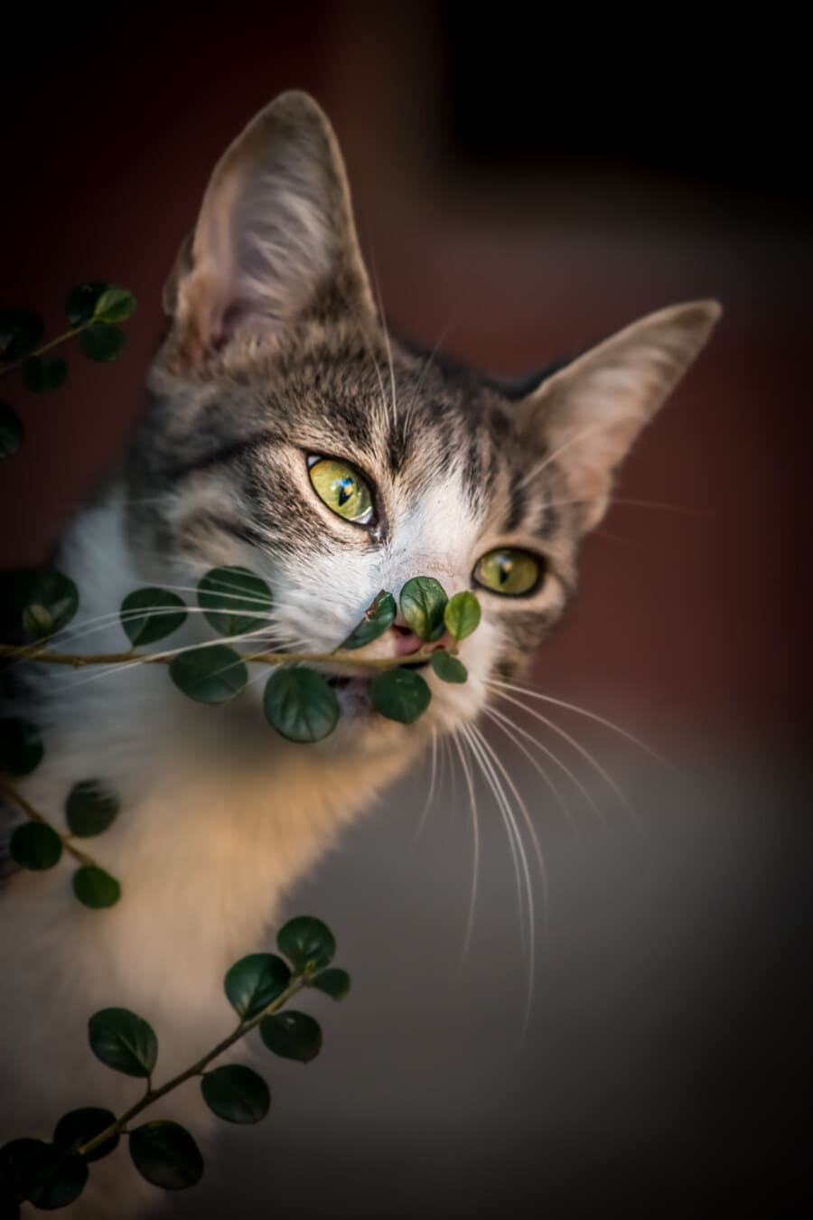 rozkošný, mačiatko, Hravé, Vonkajší, zväčšenie, vetvička, vedúci, domáce zviera, mačiatko, mačka