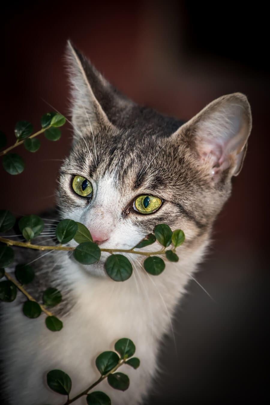 groenachtig geel, ogen, katje, op zoek, nieuwsgierigheid, huisdier, dier, binnenlandse, katachtig, binnenlandse kat