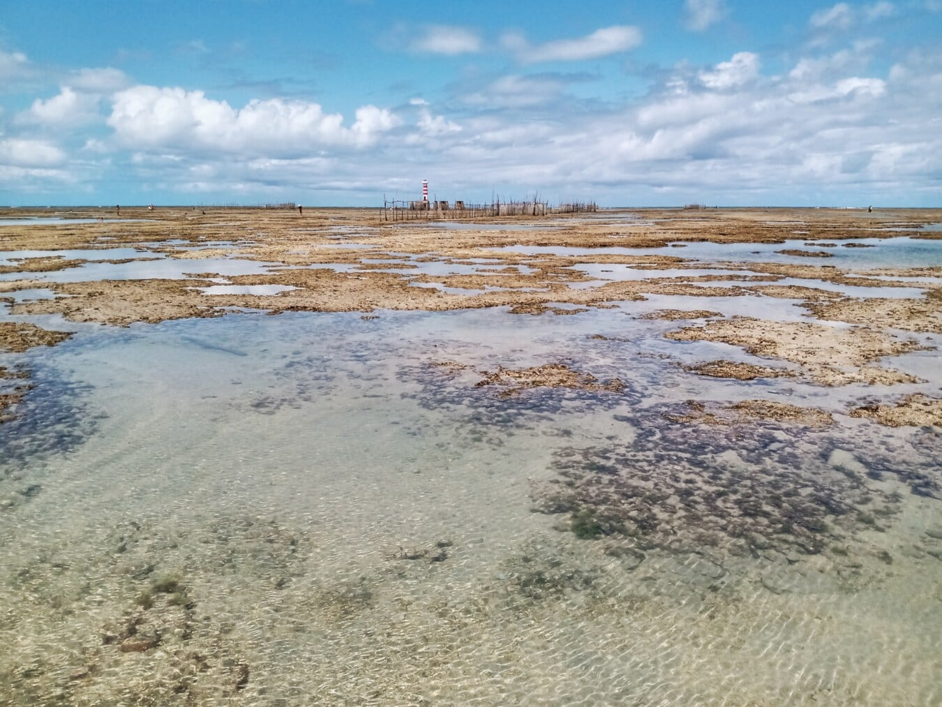 low tide, beach, beach erosion, beacon, beachfront, brazil, lowland, coral, tide, tide water