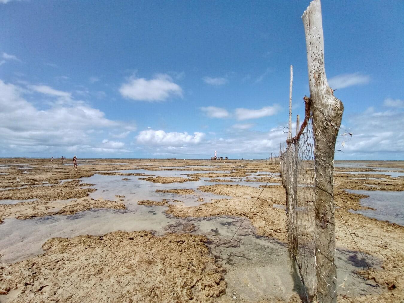 beach, beach erosion, network, coral, driftwood, nature, landscape, water, sand, wasteland