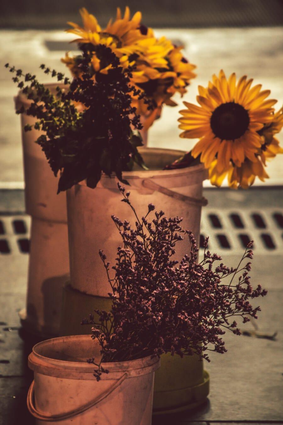 Jahrgang, Kunststoff, Eimer, Still-Leben, Sonnenblume, Blumen, trocken, Vase, Glas, Natur