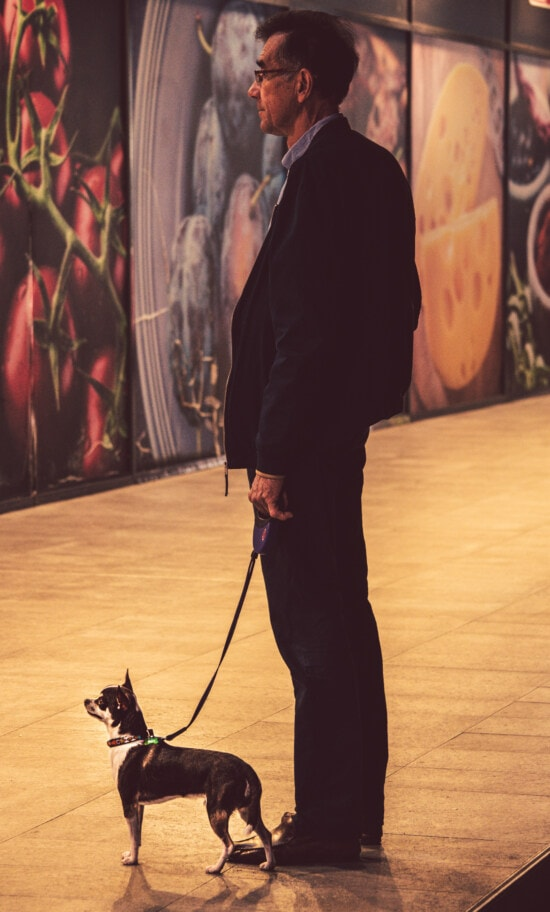 бизнесмен, домашен любимец, ходене, куче, градска зона, портрет, мъж, изкуство, мода, кучешки