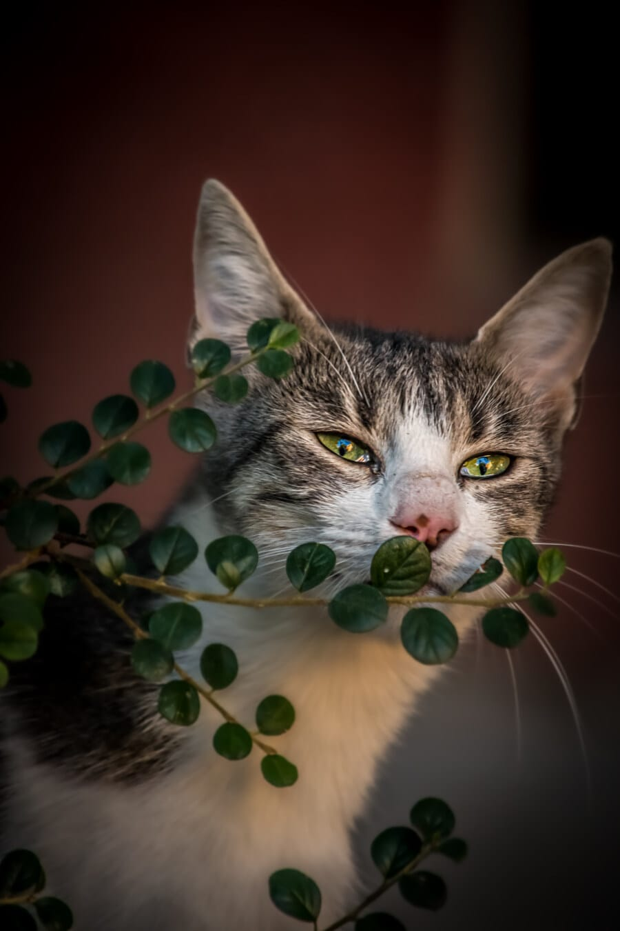 παιχνιδιάρικο, γατάκι, αξιολάτρευτο, πράσινο, τα μάτια, από κοντά, θάμνος, κλαδάκι, κεφάλι, ζώο