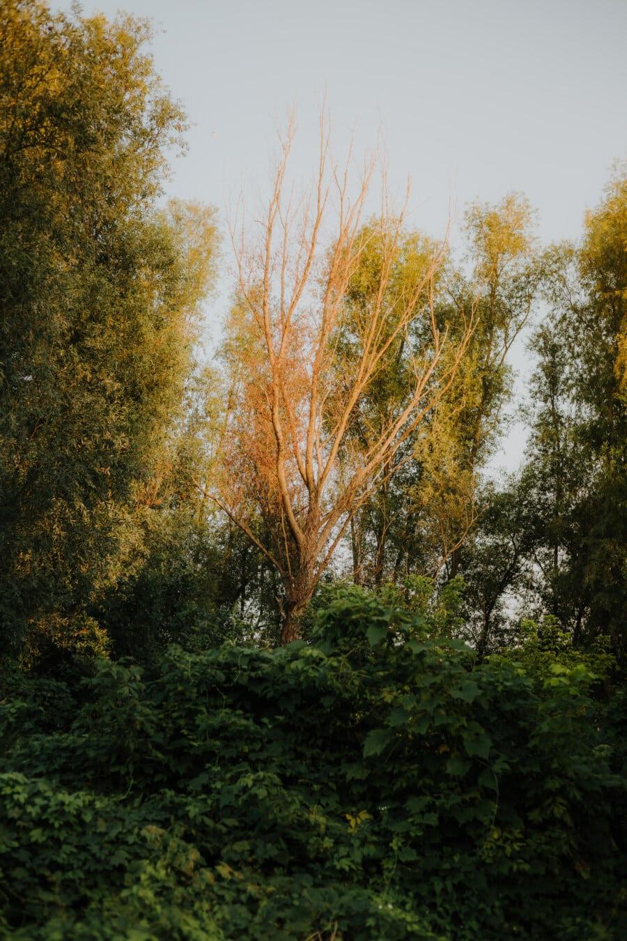 sec, arbre, printemps, forestier, verdure, forêt, lumière du soleil, paysage, feuille, parc