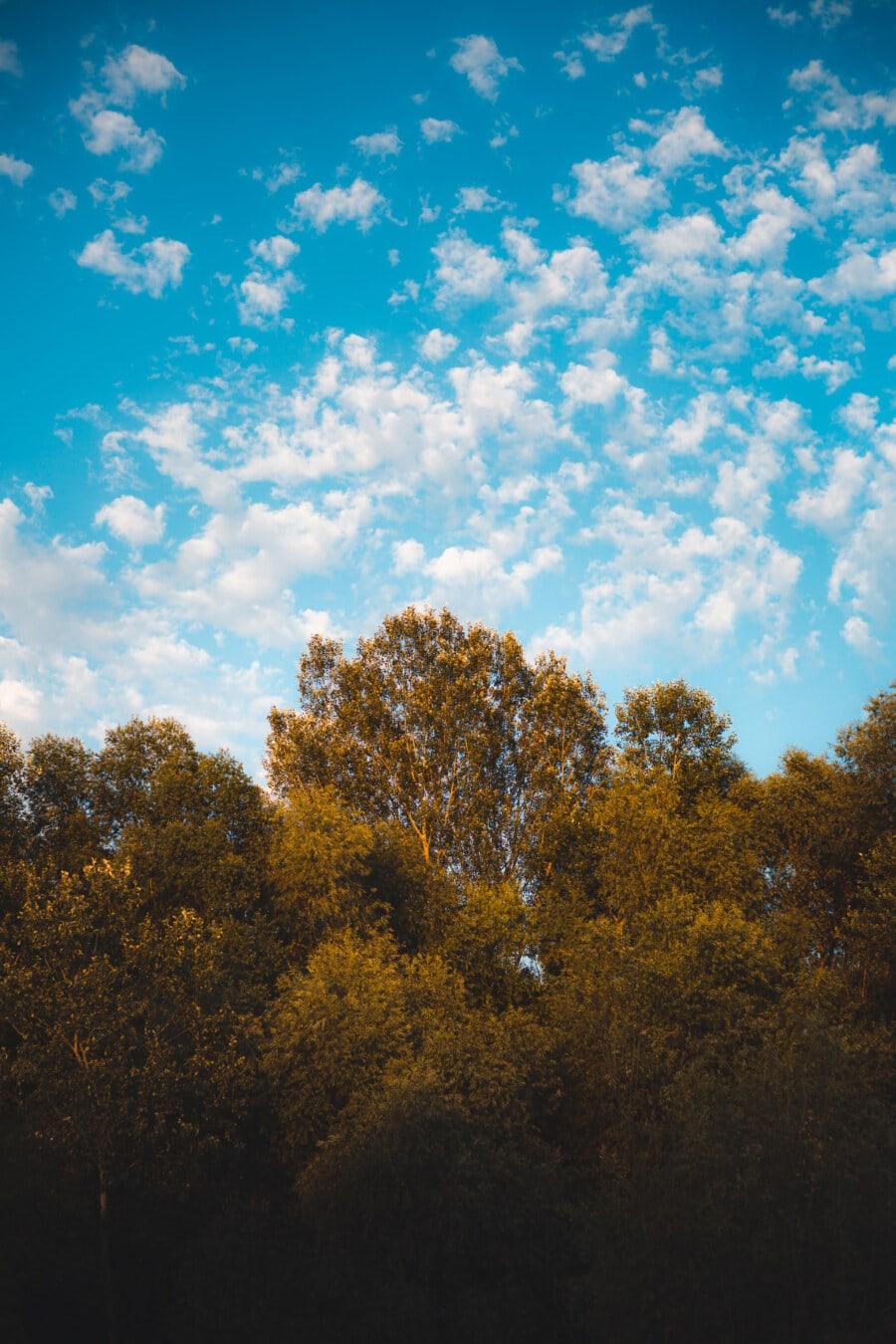 Pappel, Wald, blauer Himmel, Herbst, Landschaft, Struktur, Natur, Sonne, Schönwetter, hell