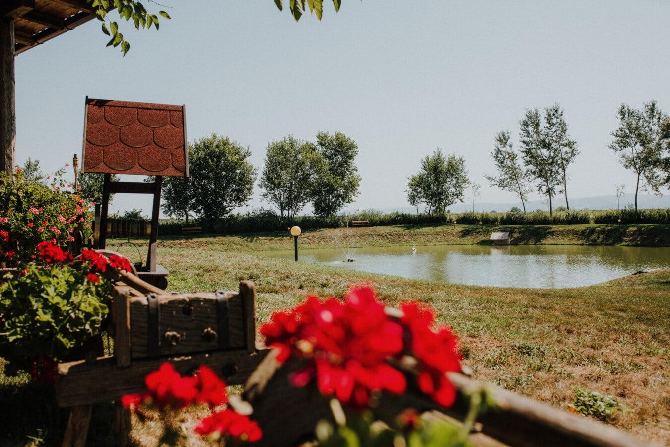 Dorf, Garten, Teich, Blumentopf, Blume, Natur, Struktur, Gras, Blatt, Sommer