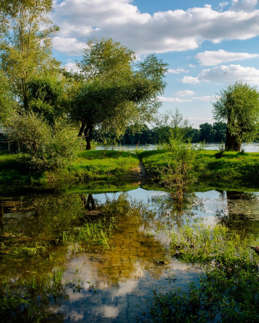 Lac, printemps, terrain marécageux, faune, nature sauvage, eau, réflexion, forêt, rivière, marais