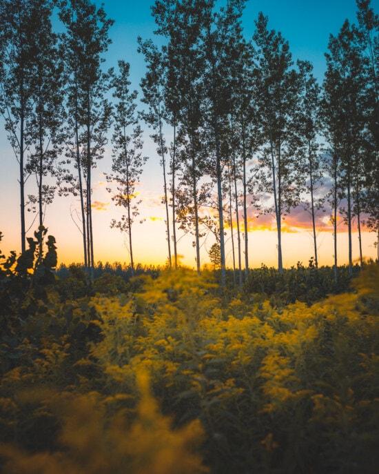 sunrays, dusk, forest, majestic, sunlight, leaf, tree, landscape, dawn, nature