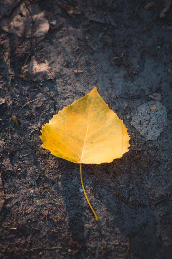 yellow leaves, dry season, leaf, dry, soil, ground, herb, autumn, nature, texture