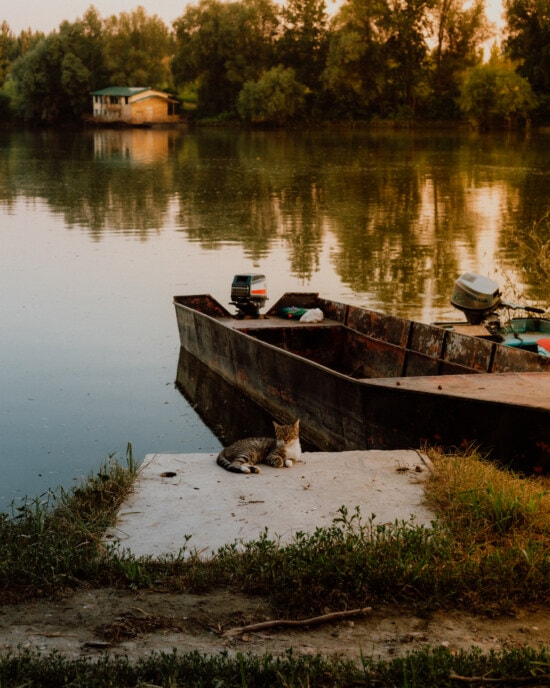 laying, tabby cat, enjoyment, relaxation, coast, lakeside, water, boat, river, reflection