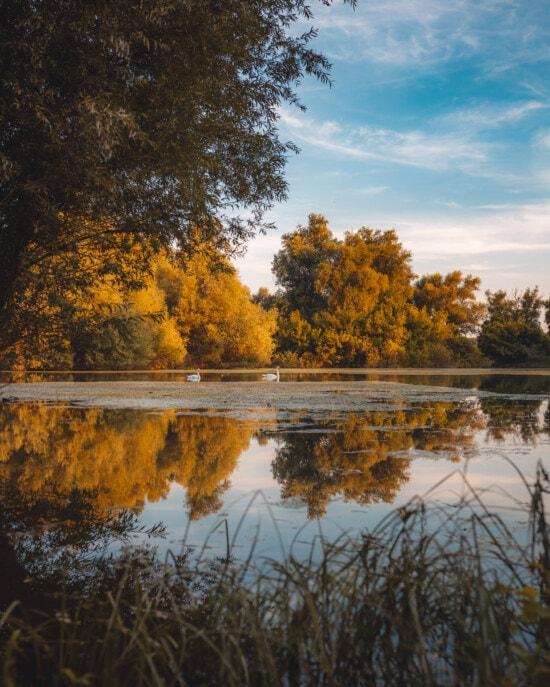 majestätisch, Herbst, am See, Herbstsaison, ruhig, Sumpf, Struktur, Landschaft, Wasser, See