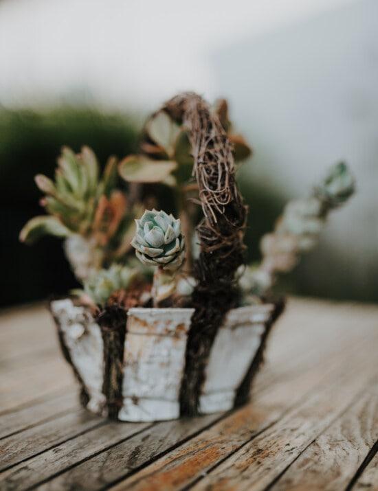 cactus, flowers, flowerpot, handmade, basket, still life, flower, flora, leaf, miniature
