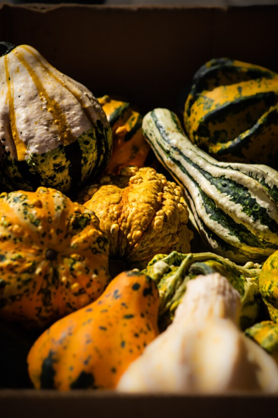squash, pumpkin, products, organ, agriculture, zucchini, vegetable, produce, still life, nature