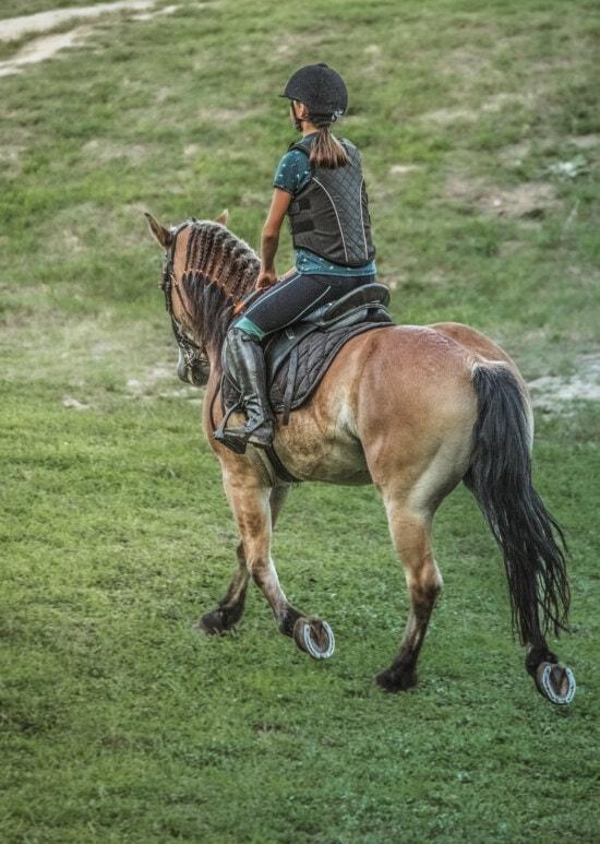 curse de cai, cal, adolescent, tanara, călare, activitate fizică, program de formare, Armasarul, cavalerie, animale