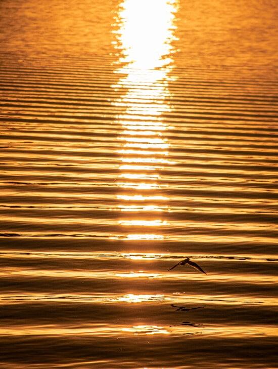 horizont, západ slunce, vlna, reflexe, vlny, zlatá záře, oranžově žlutá, slunce, Dawn, abstrakt