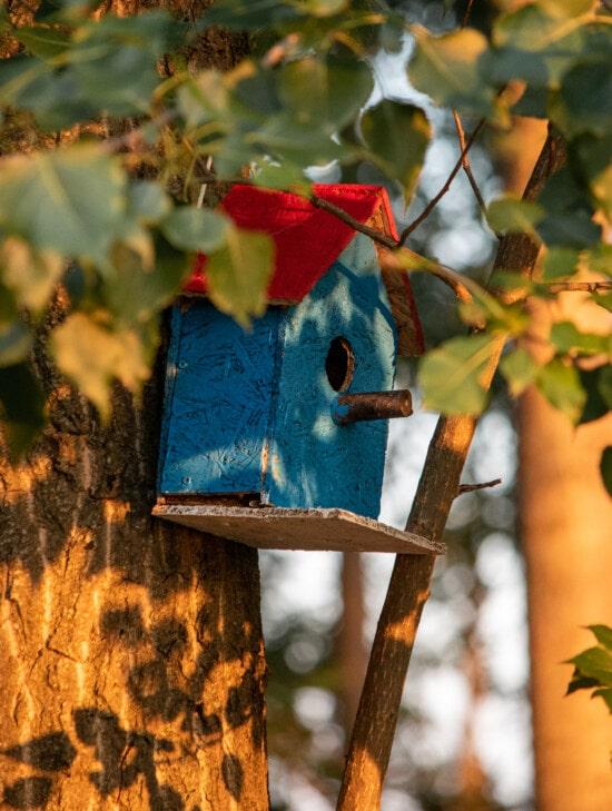 hnízdo, dům na stromě, strom, barevné, ručně vyráběné, dřevěný, předsazení, příroda, dřevo, list