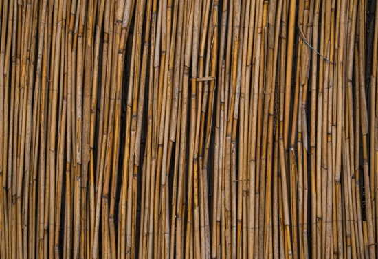 reed grass, texture, reeds, stripe, vertical, material, rough, pattern, dirty, old