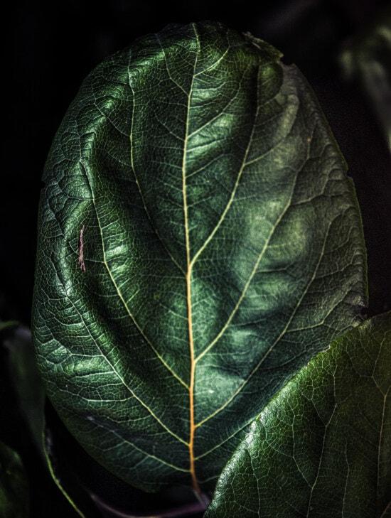 verde inchis, clorofilă, frunze, textura, umbra, până aproape, viata, organismului, plante, iarbă