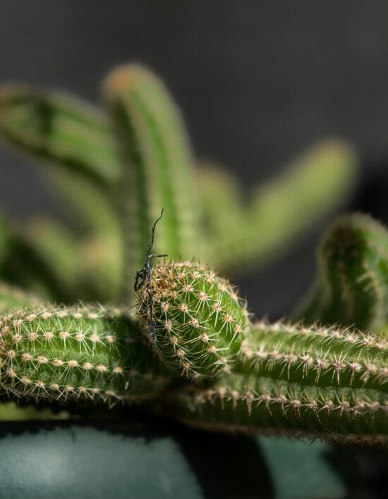 maceta, flor, cactus, contacto directo, espiga, suculenta, flora, hoja, sostenido, naturaleza