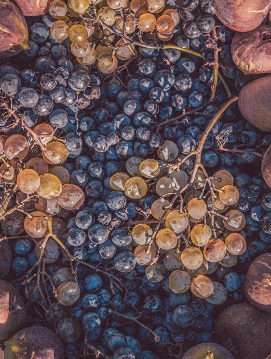 grape fruit, grapes, ripe fruit, fig, fruit, close-up, organic, texture, blue, dark blue